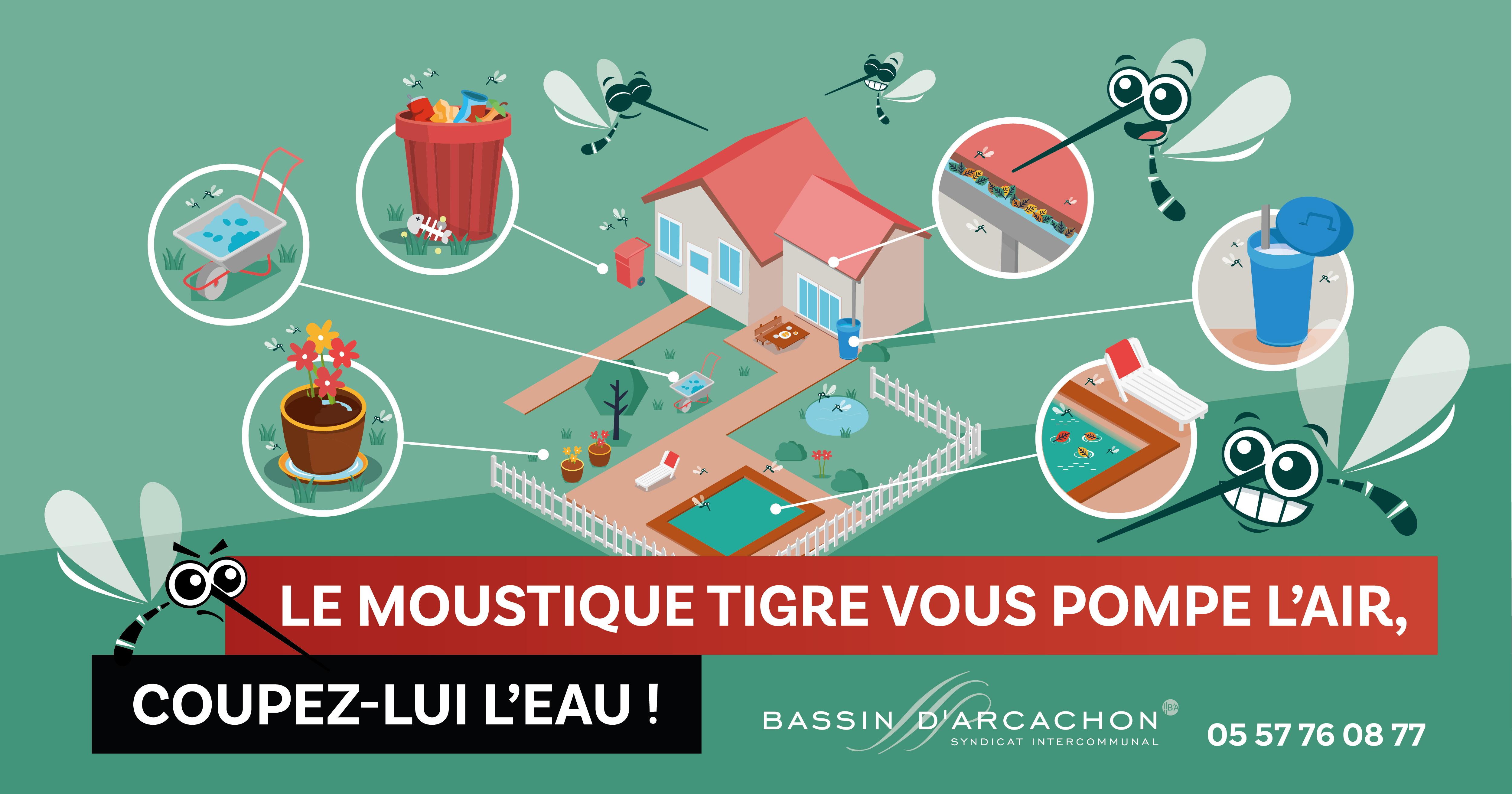 Moustique tigre - Image Facebook