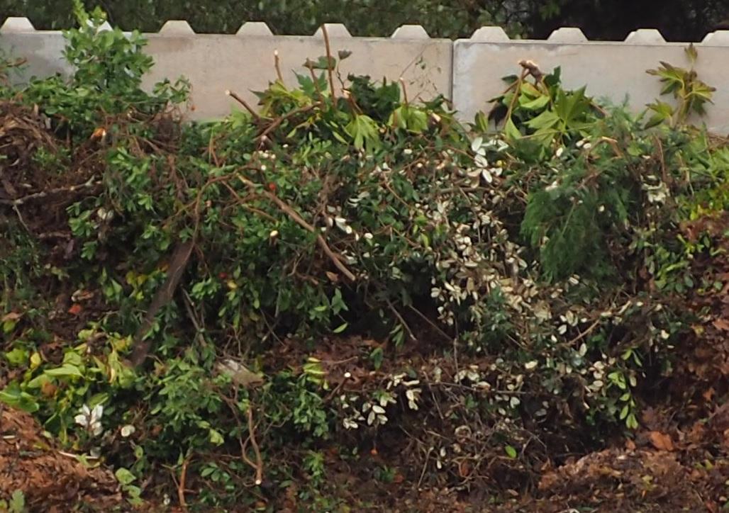 Nouvelles conditions de collecte des déchets verts en porte-à-porte